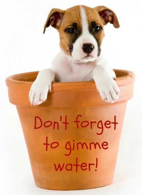 Puppy in a Pot