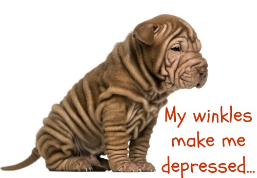 Natural Depression Remedies For Dogs