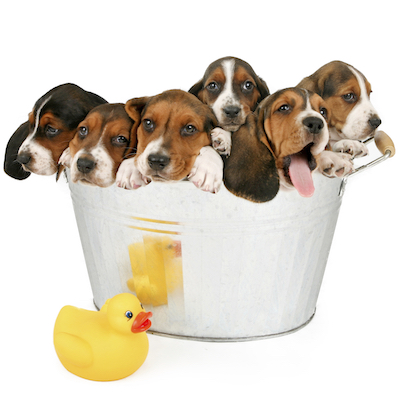 Puppies in Tub