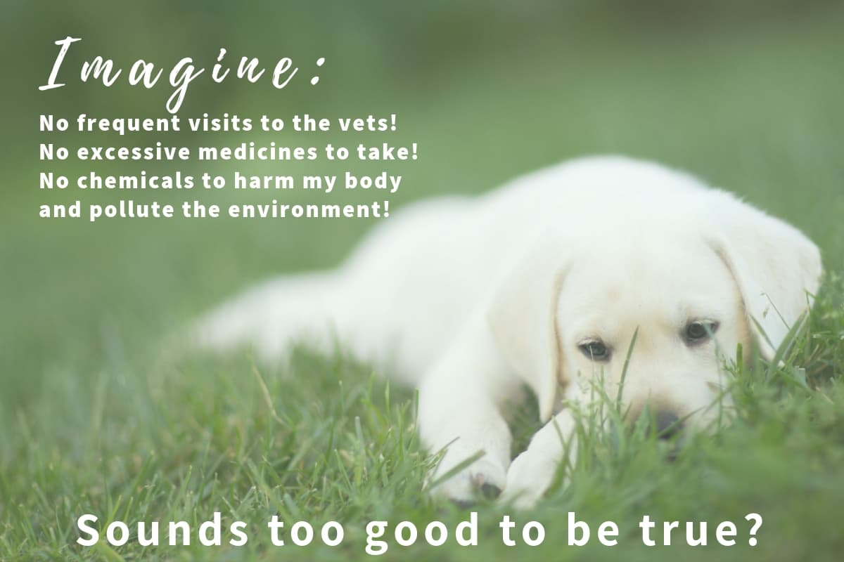 Natural Dog Health Remedies Index Pic