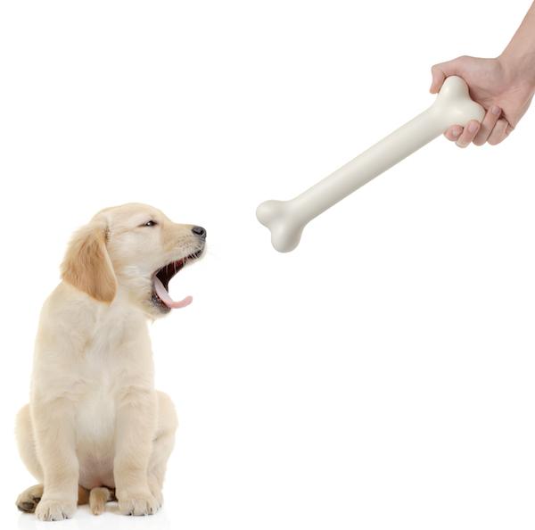 Puppy and a Bone