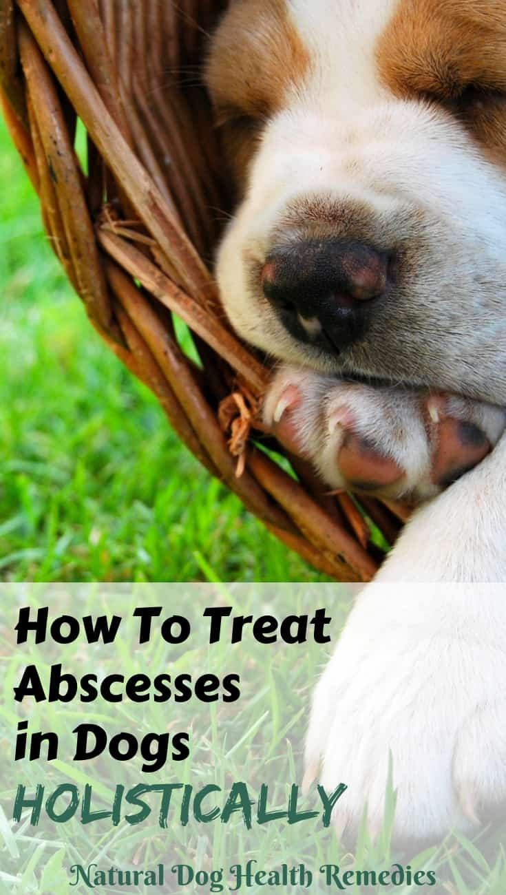 How to Treat Abscess on Dogs