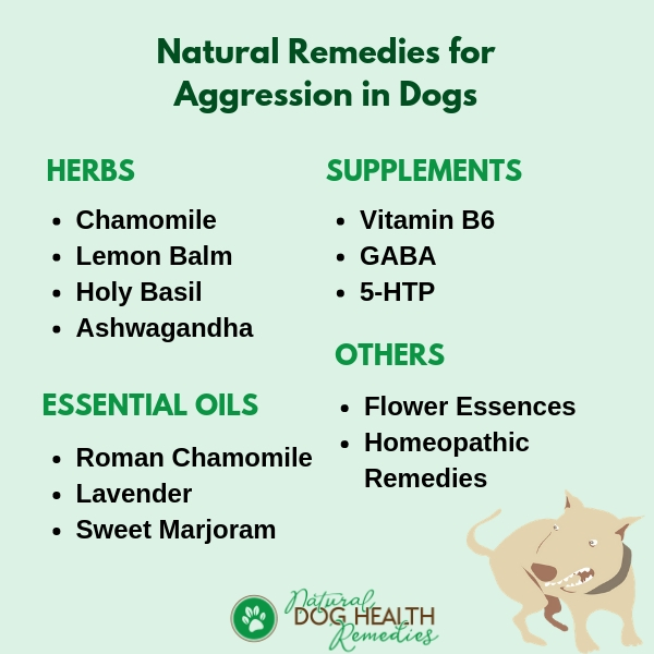 Natural Remedies for Dog Aggression
