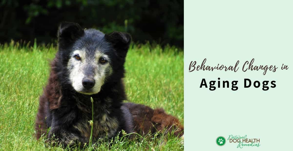 Behavioral Changes in Aging Dogs