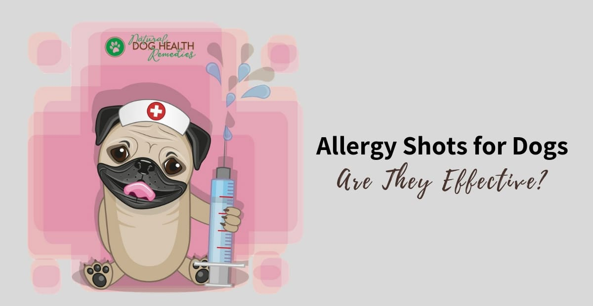 Allergy Shots for Dogs