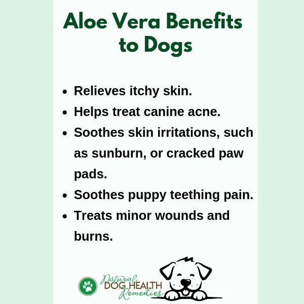 Benefits of Aloe Vera to Dogs