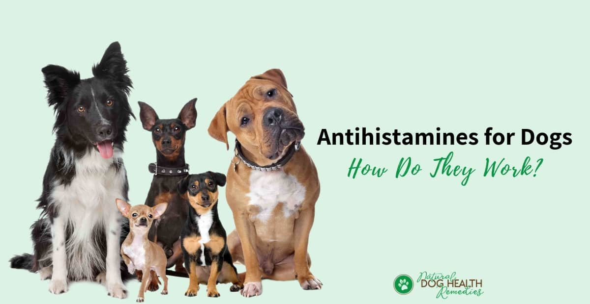 Antihistamines for Dogs