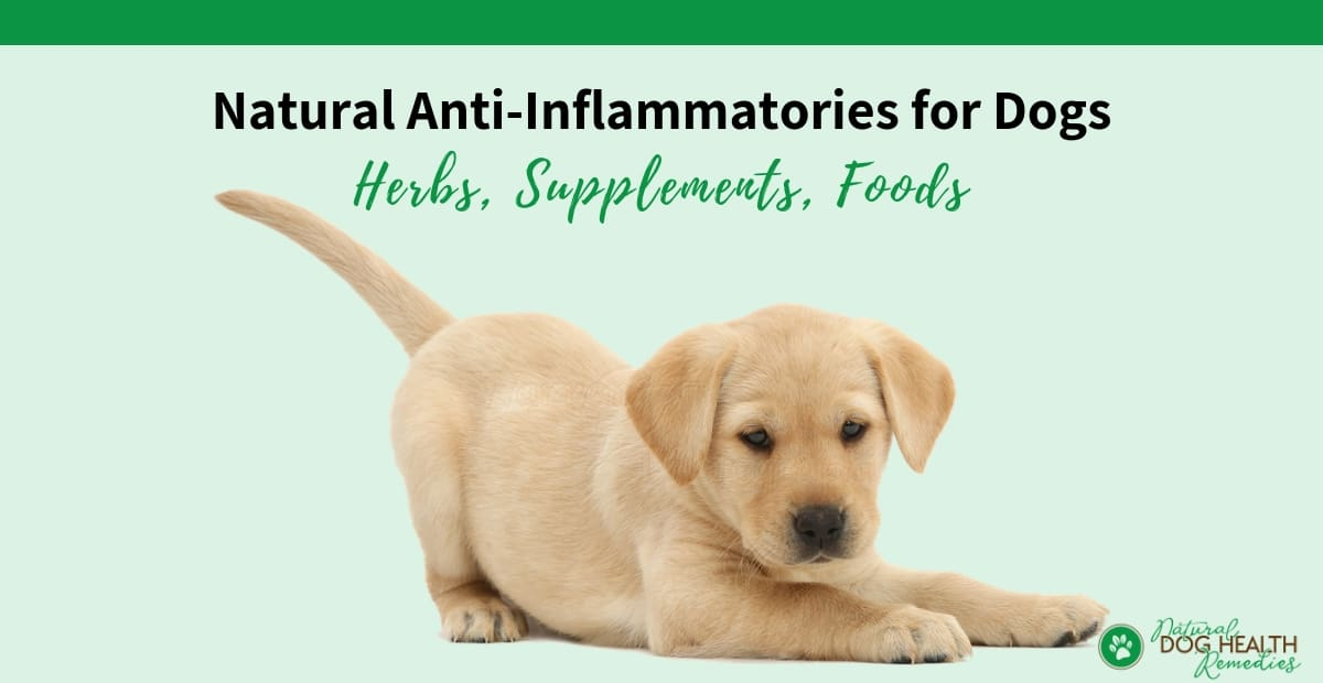 Anti Inflammatory for Dogs