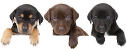 Puppy Banner