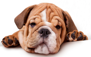 What Makes A Dog Lethargic