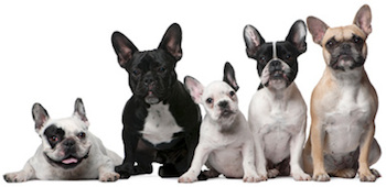 A banner of dogs