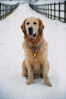 He loves snow