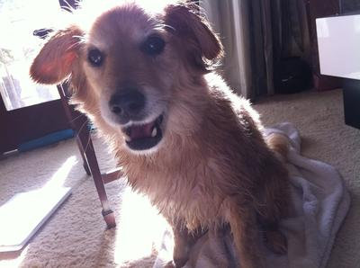 bladder tumor in dog