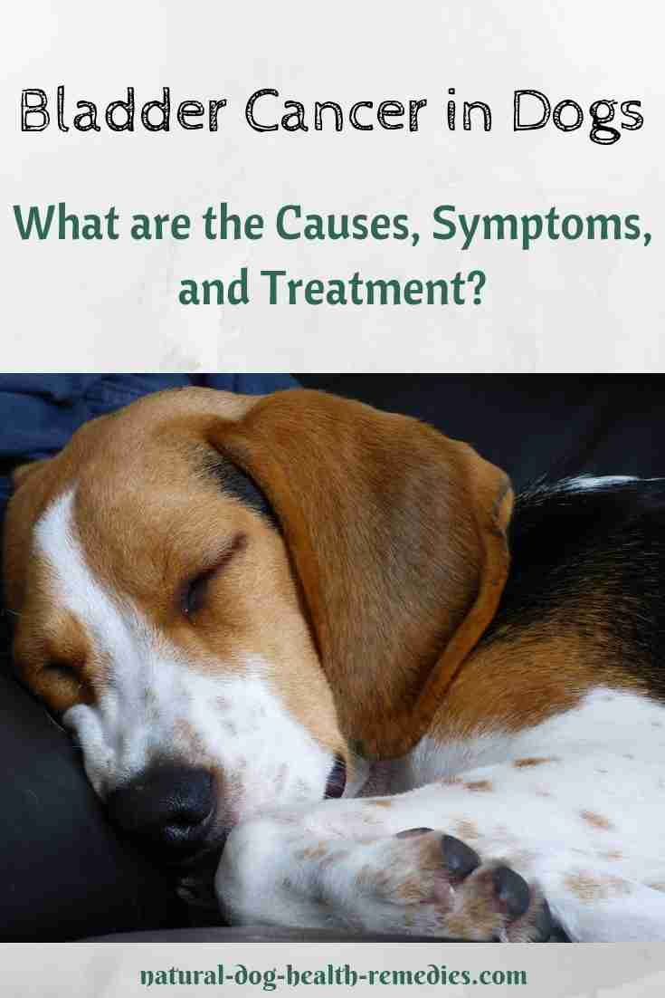 Homeopathic treatment for cystitis in dogs