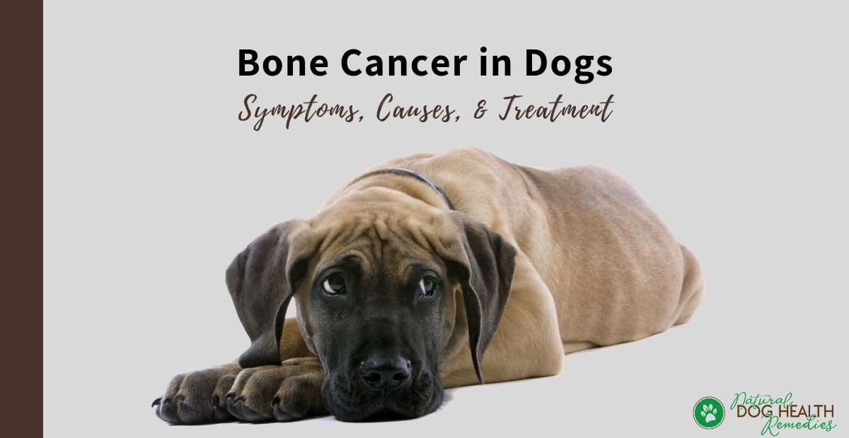 Bone Cancer in Dogs