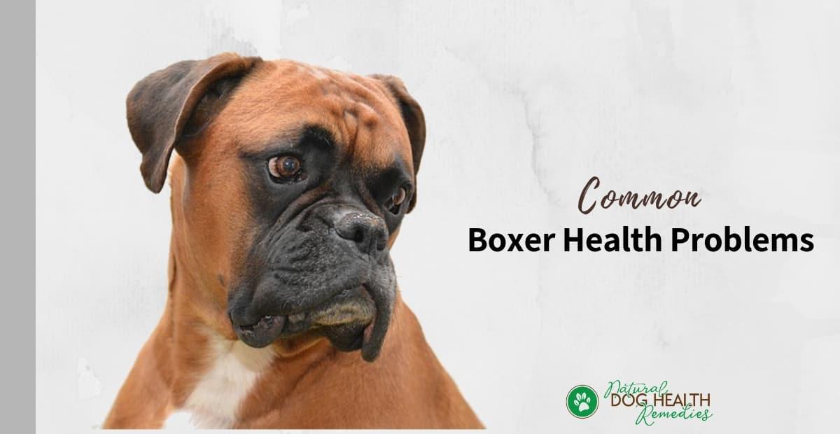 Boxer Health Problems
