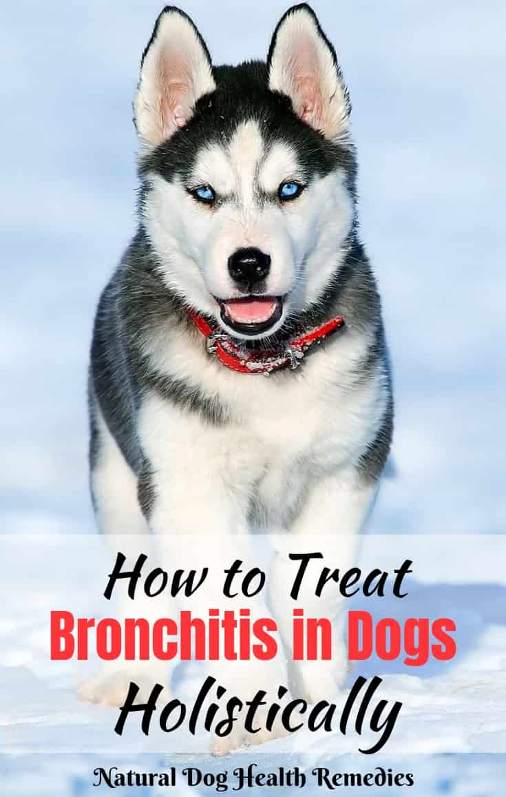 Chronic Bronchitis in Dogs | Causes, Symptoms, Treatment & Remedies