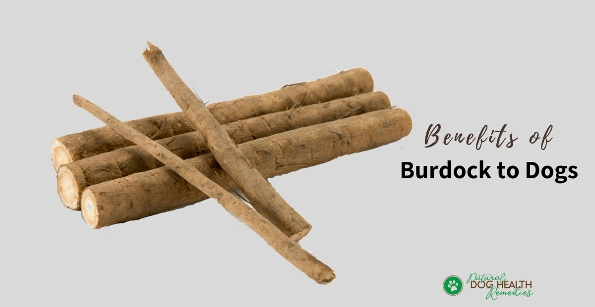 Burdock Roots for Dogs