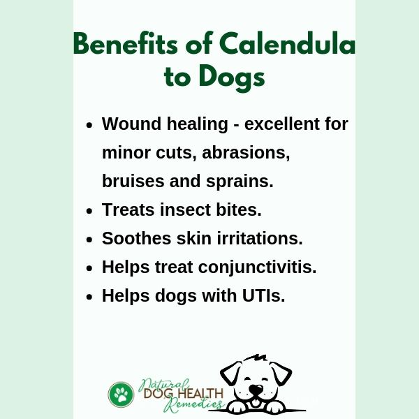 Benefits of Calendula to Dogs