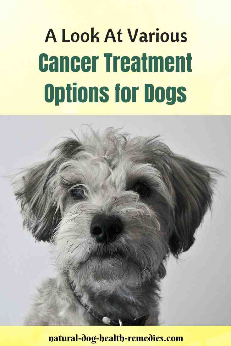 Cancer Treatment Options for Dogs
