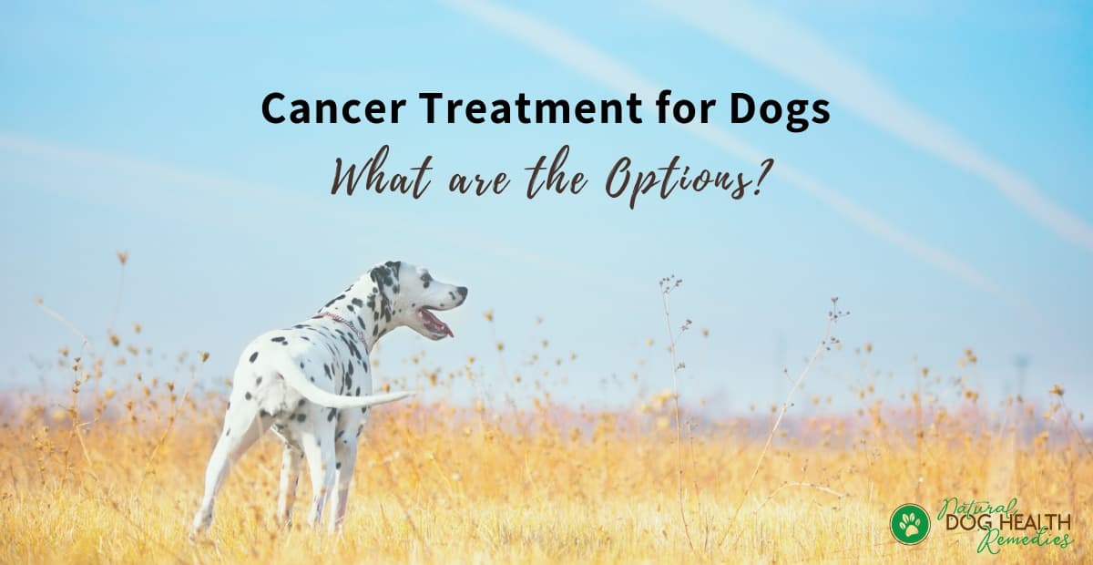 Cancer Treatment for Dogs