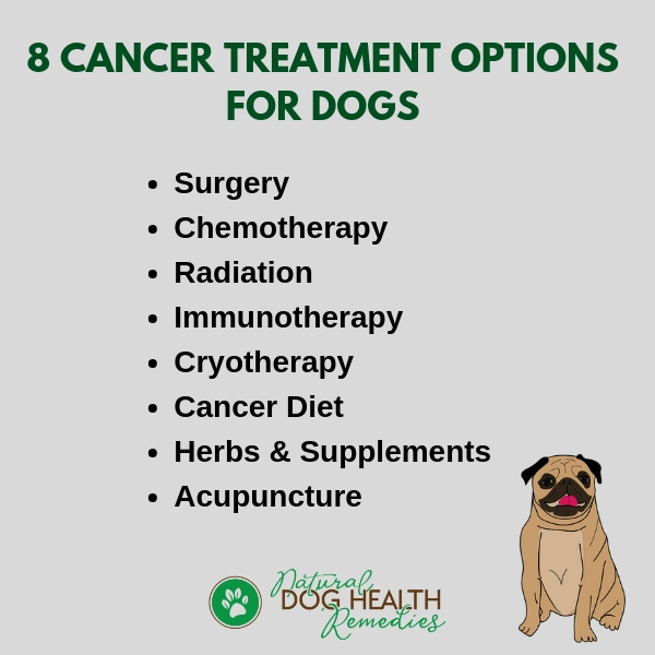 8 Cancer Treatment Options for Dogs
