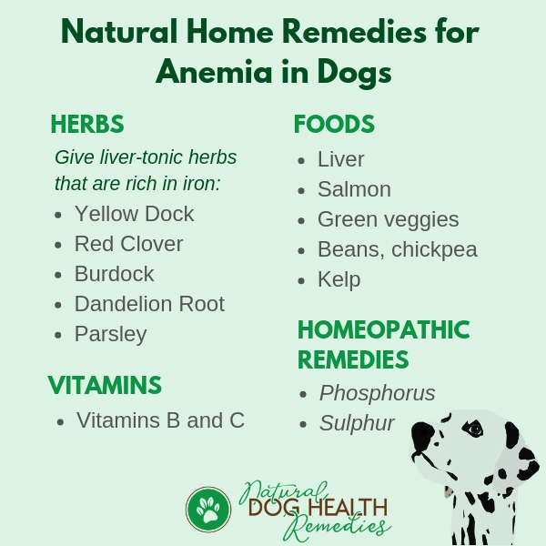 Canine Anemia Natural Home Remedies