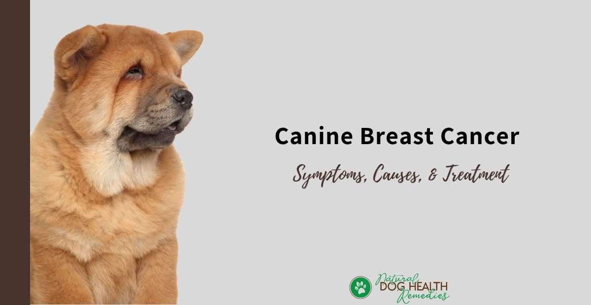 Canine Breast Cancer