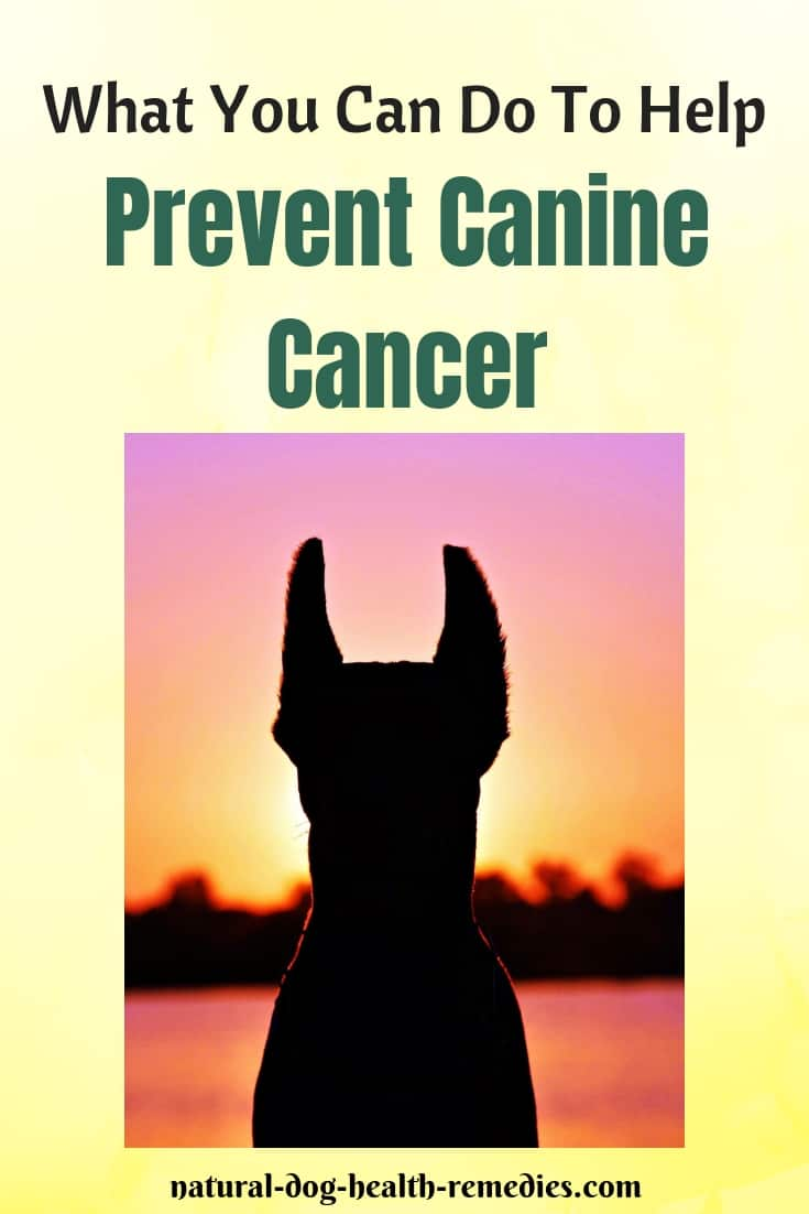 Do These Things To Prevent Canine Cancer