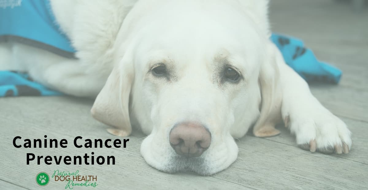 Canine Cancer Prevention