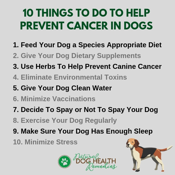 Ten Things To Do To Prevent Canine Cancer
