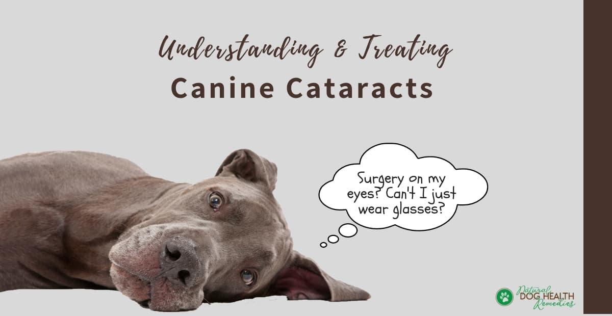 Canine Cataracts