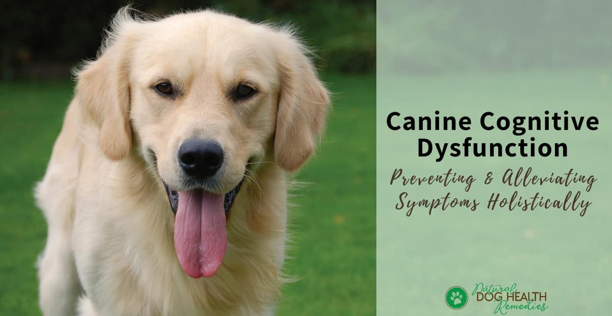 Canine Cognitive Dysfunction