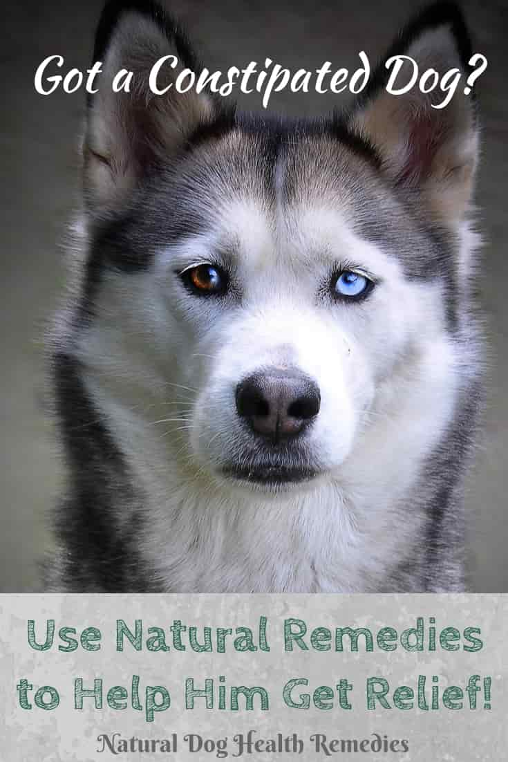 Natural Canine Constipation Home Remedies