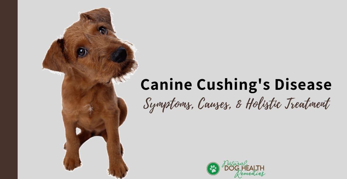 Canine Cushings Disease