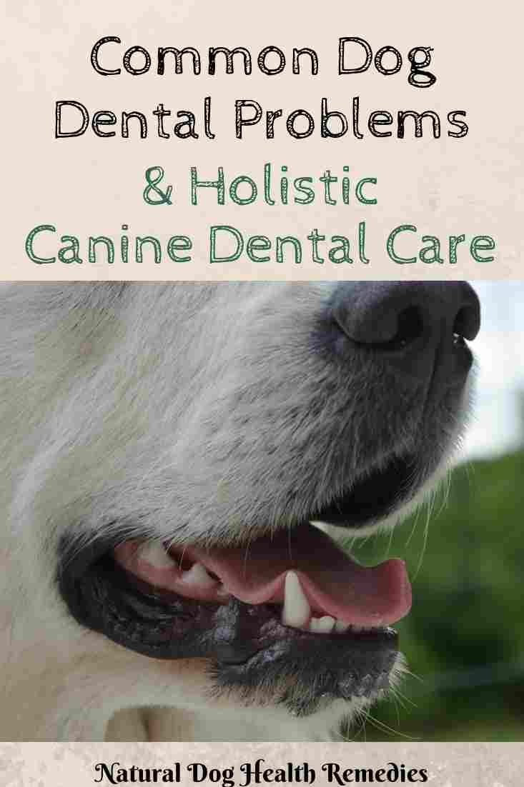 Home Dental Care for Dogs