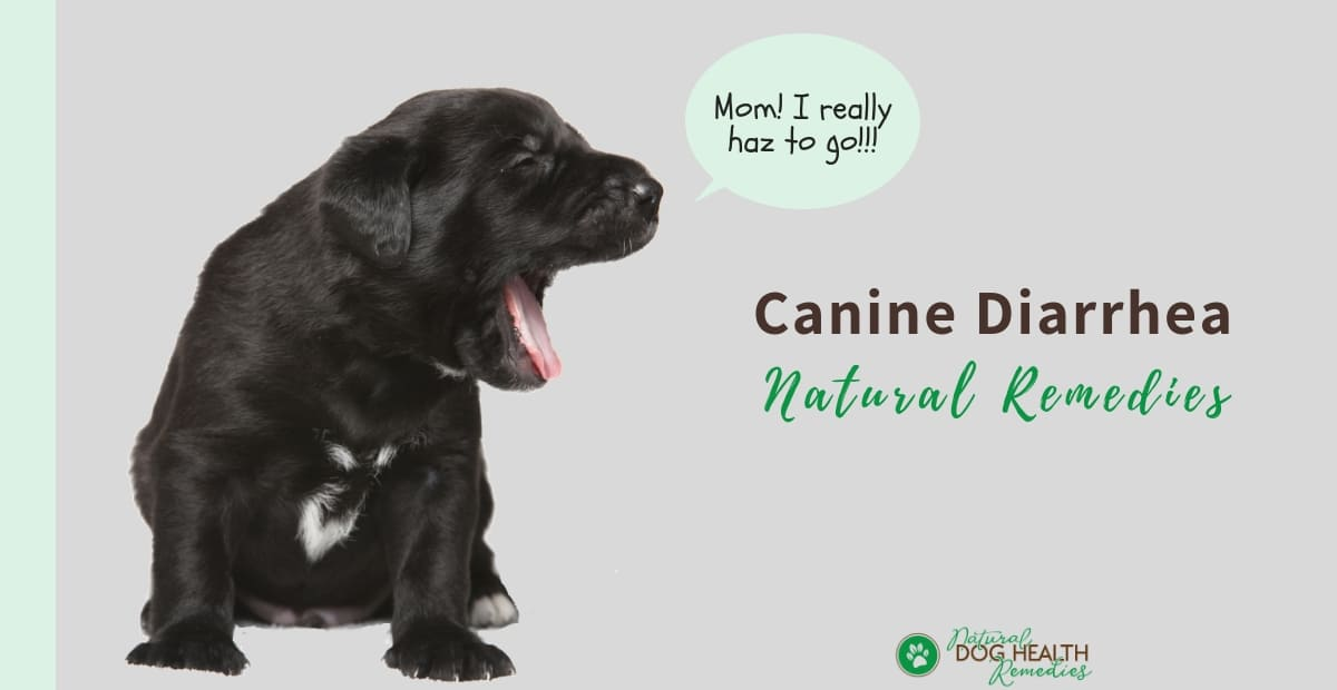 Natural Canine Diarrhea Remedies