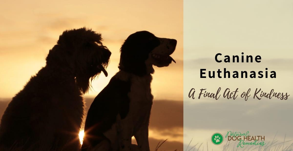 Canine Euthanasia