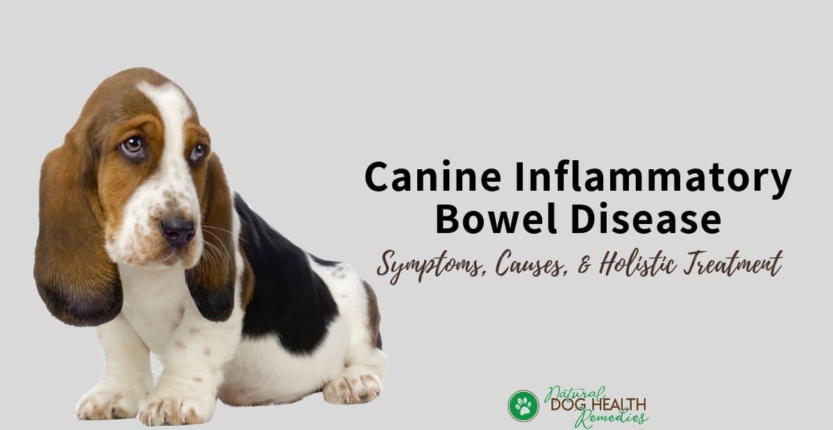 Canine IBD