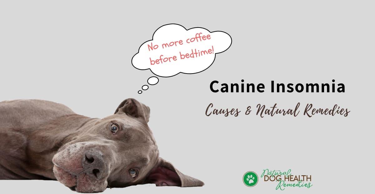 Canine Insomnia