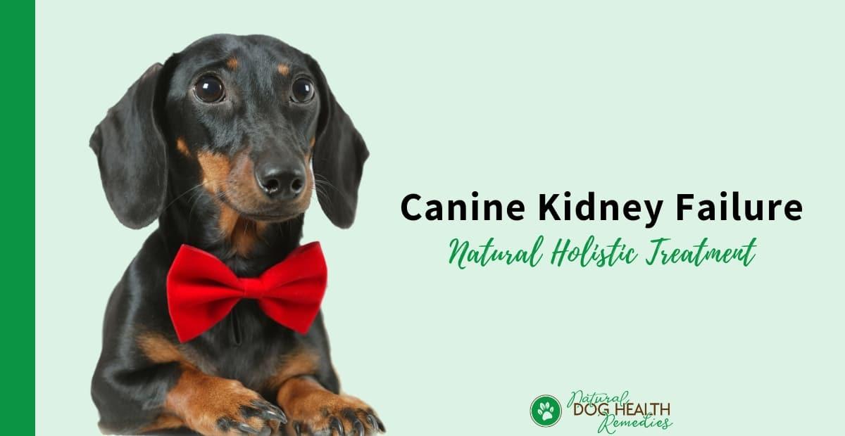 Canine Kidney Failure