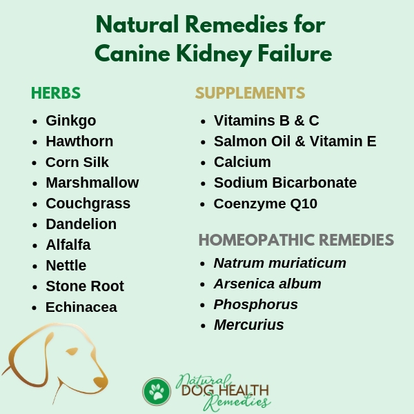 Canine Kidney Failure Natural Remedies