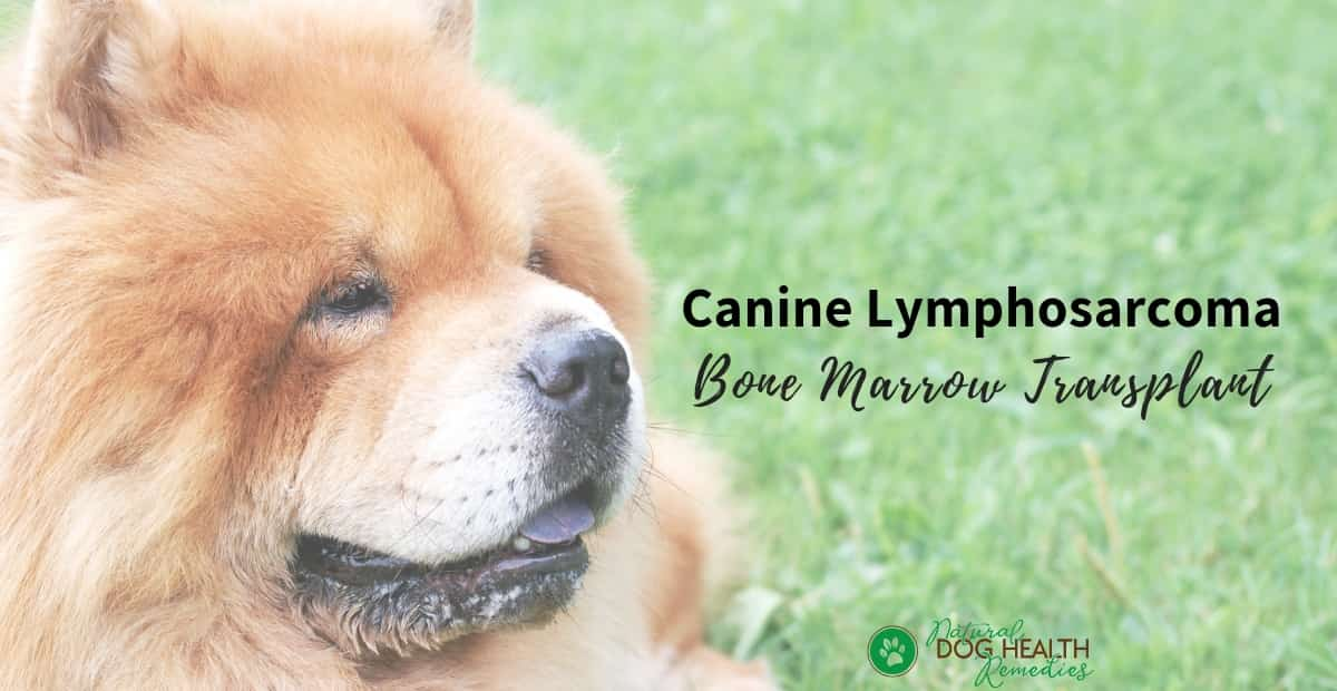 Canine Lymphosarcoma