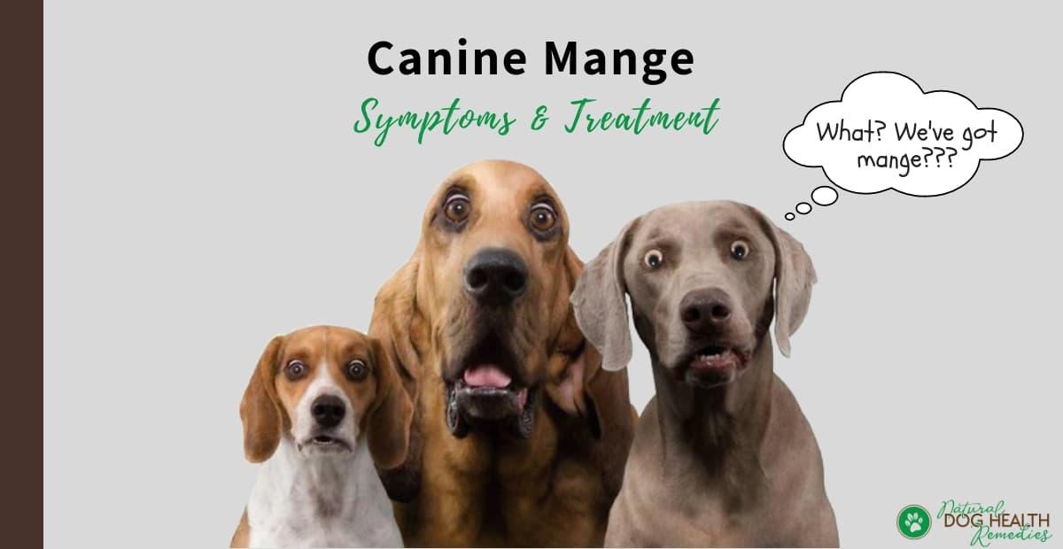 Canine Mange