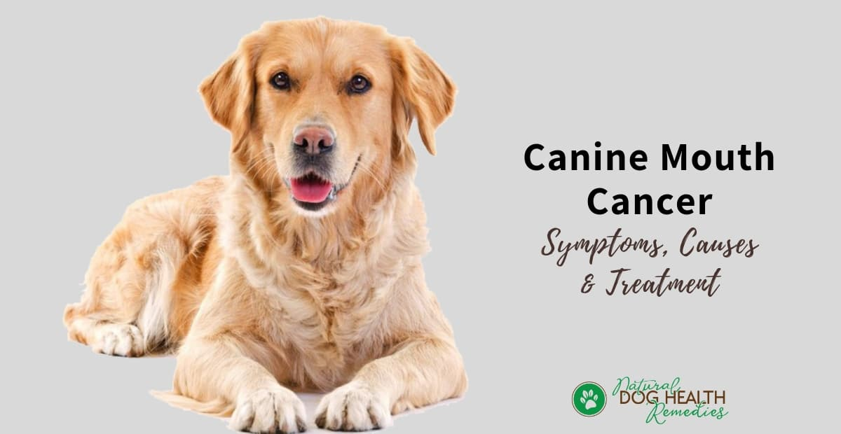 Canine Mouth Cancer