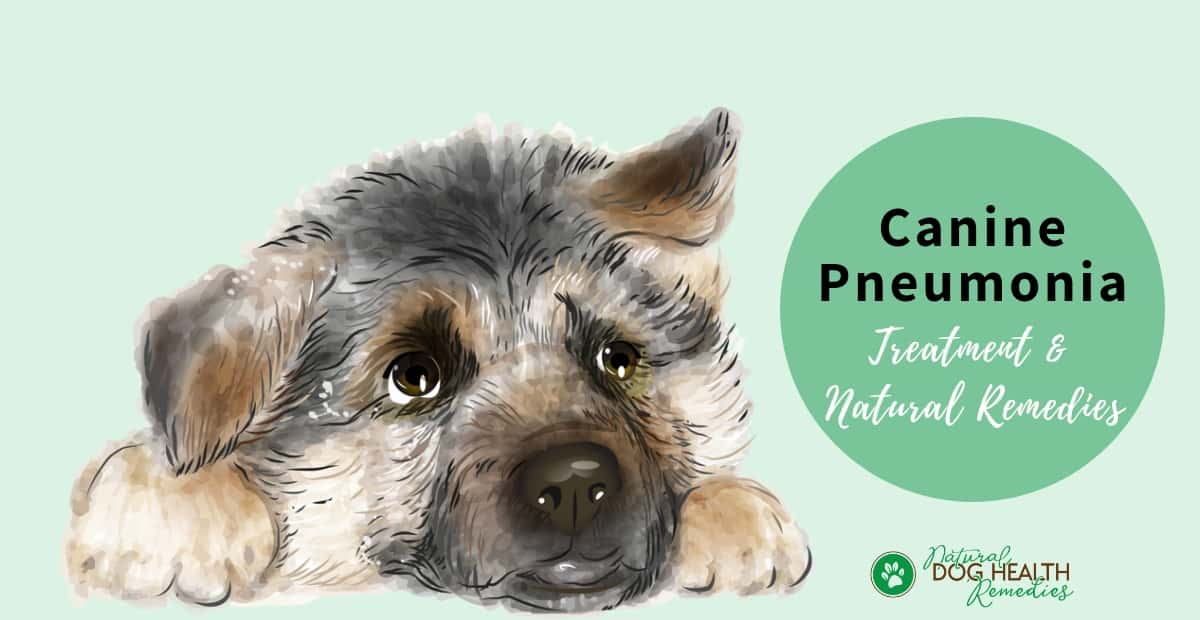Canine Pneumonia Symptoms Causes Natural Home Remedies