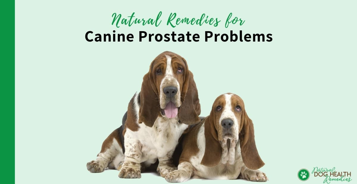 Canine Prostate Remedies
