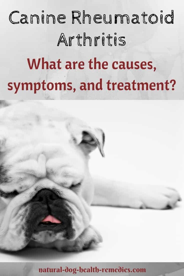 Canine Rheumatoid Arthritis Treatment