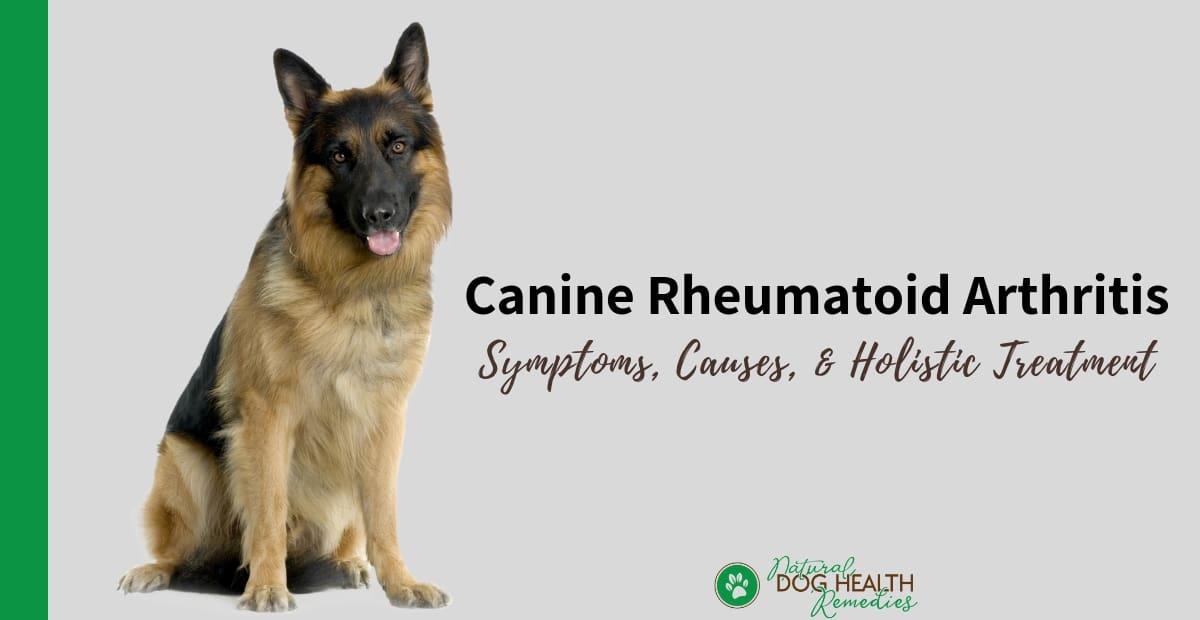 Canine Rheumatoid Arthritis