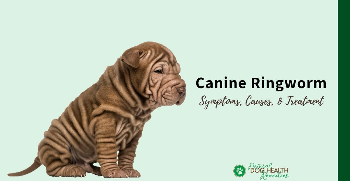 Canine Ringworm